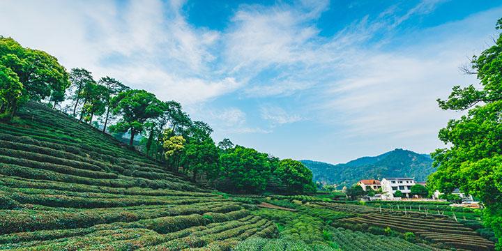 Villagio Culturale del Tè Meijiawu