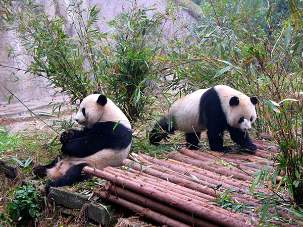Base dei Panda di Bifengxia