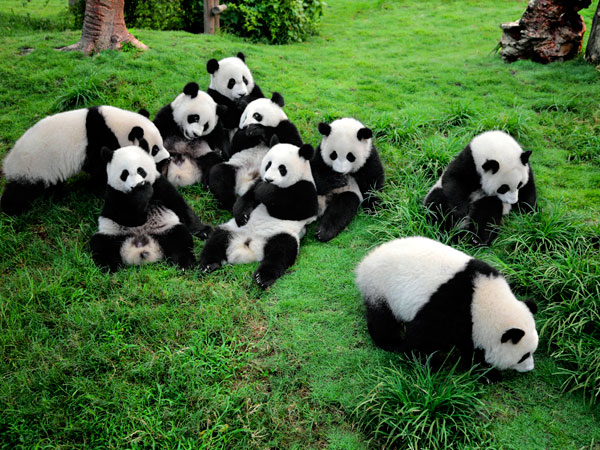 La Base del Panda gigante di Dujiangyan