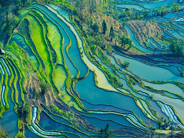 Risaie a Terrazze di Yuanyang
